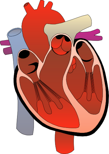Benefits of Testosterone : Cardiac Support